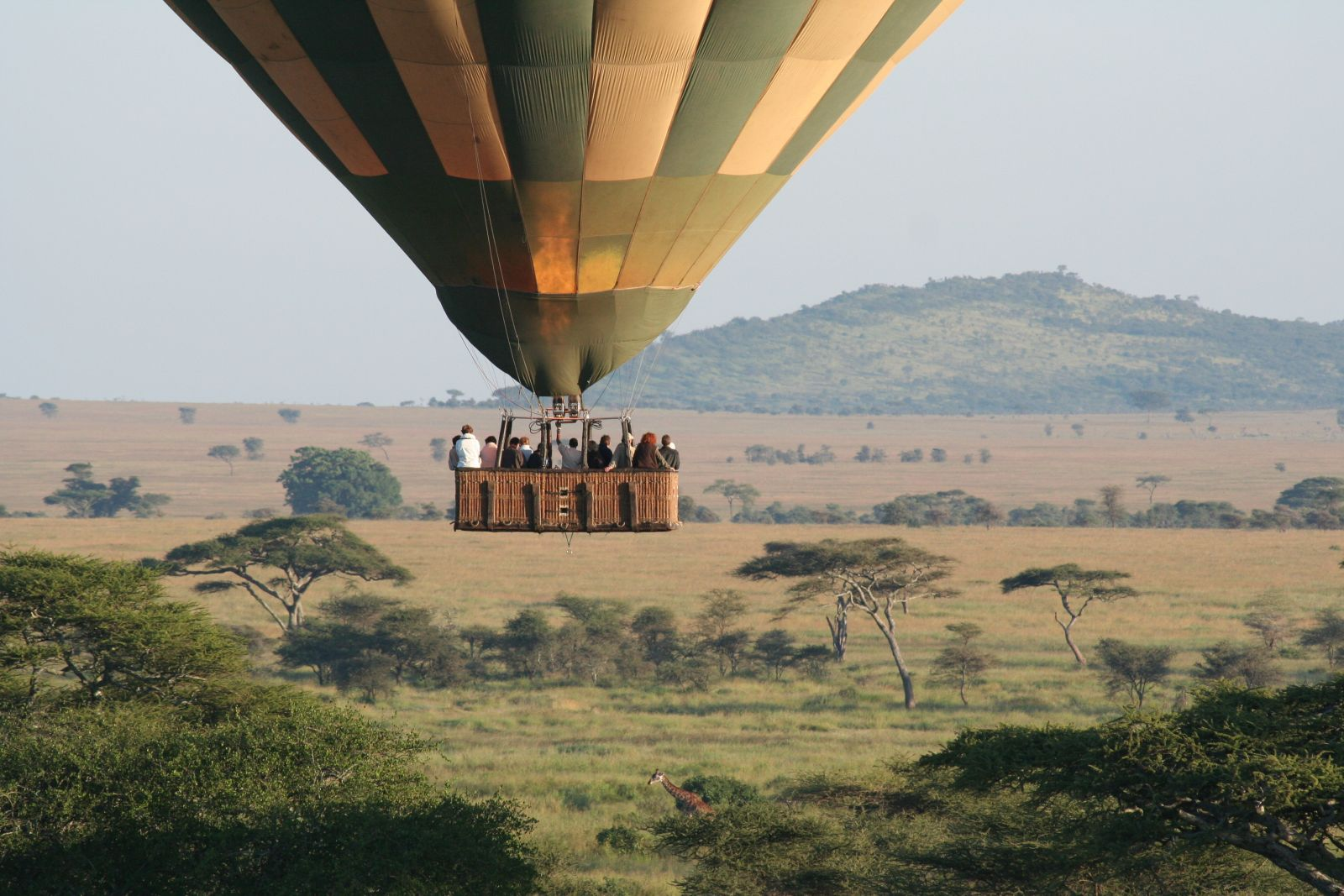 Balloon on safari